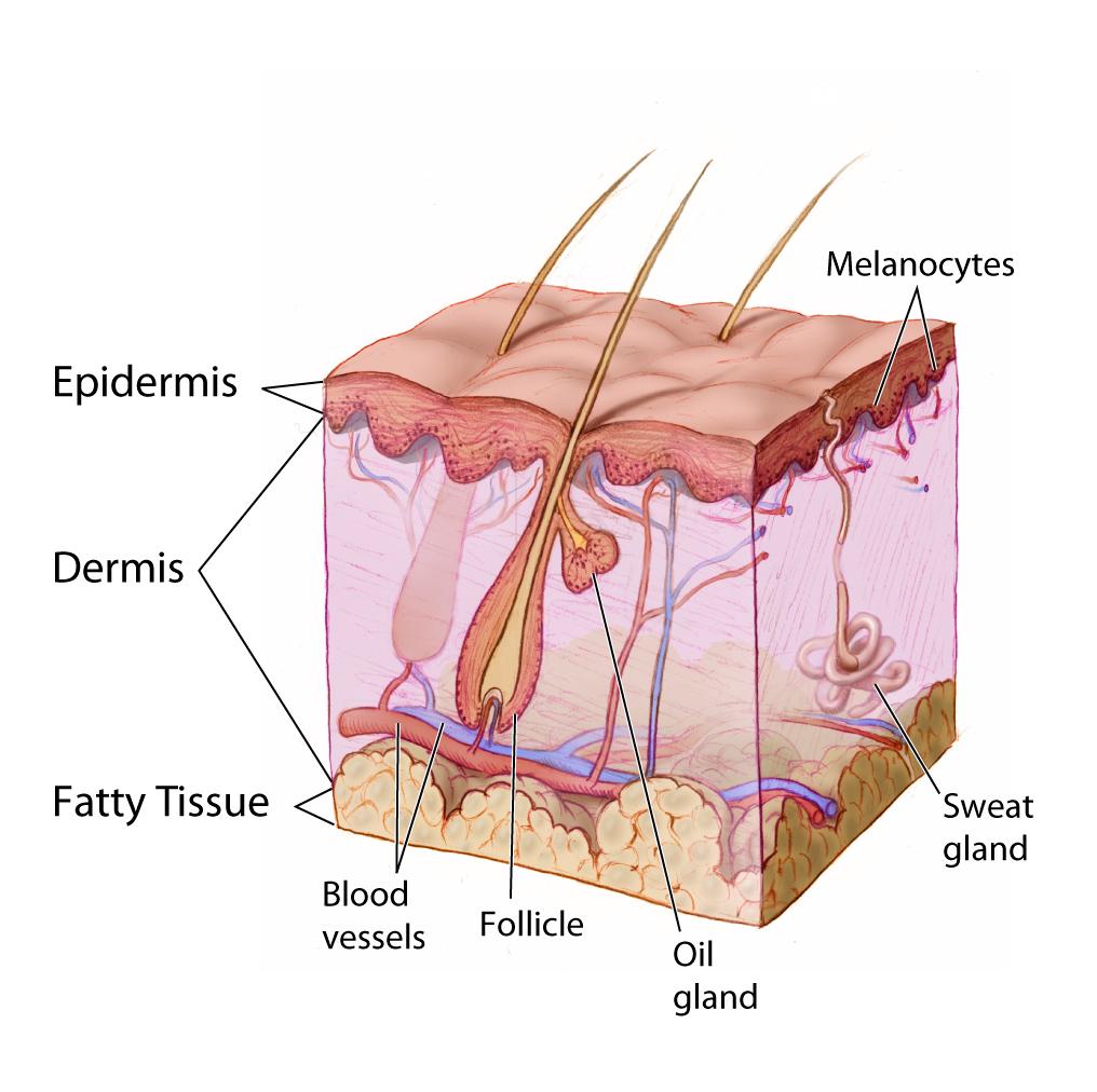 Увлажнение кожи может быть вредным