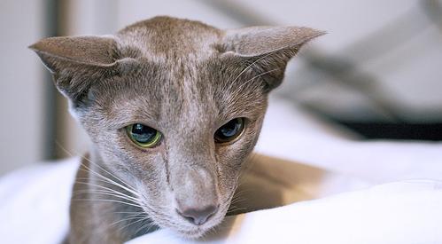 Мода на кошачий разрез глаз