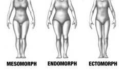 Типы сложения тела