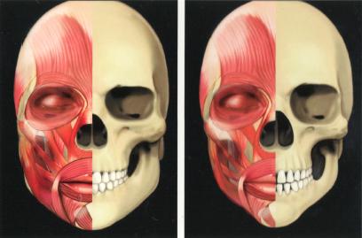 Мышцы лица фото